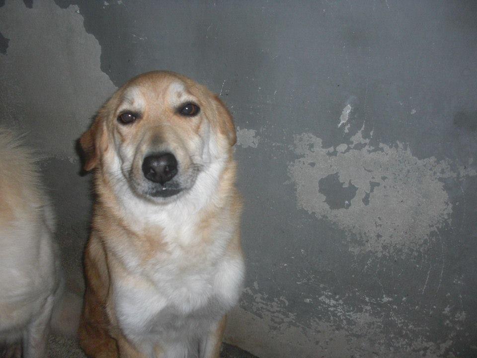 Il cane Mughetta