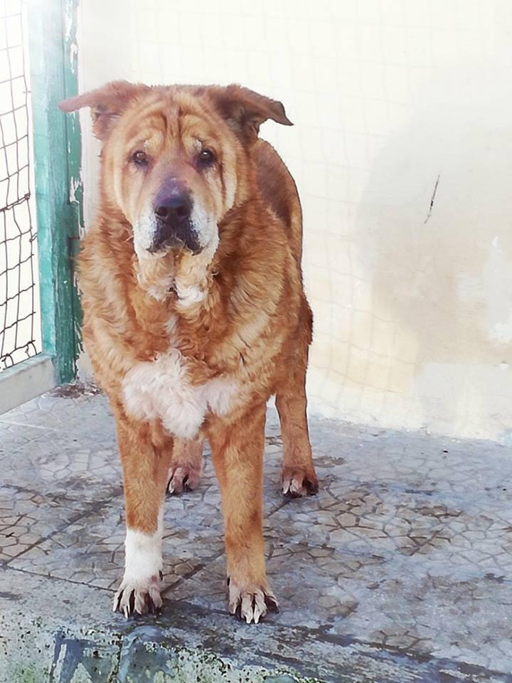 Il cane Hanna
