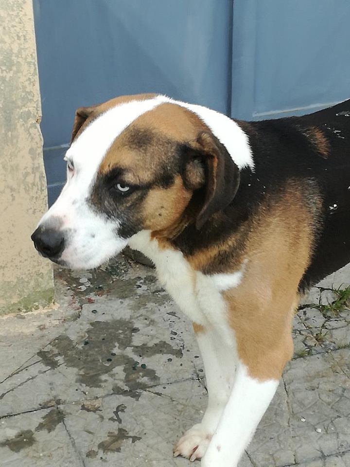 Il cane Raul